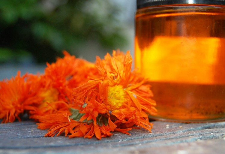 Calendula officinalis flower and oil pic
